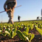 Sigue crecimiento de productos transgénicos en Colombia